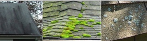 alage moss lichen growth roof