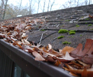 clogged gutter leaves