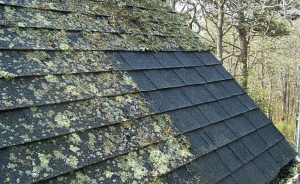 lichen growth on roof