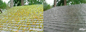 moss before and after